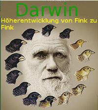 Darwinismus = Höherentwicklung von Fink zu Fink