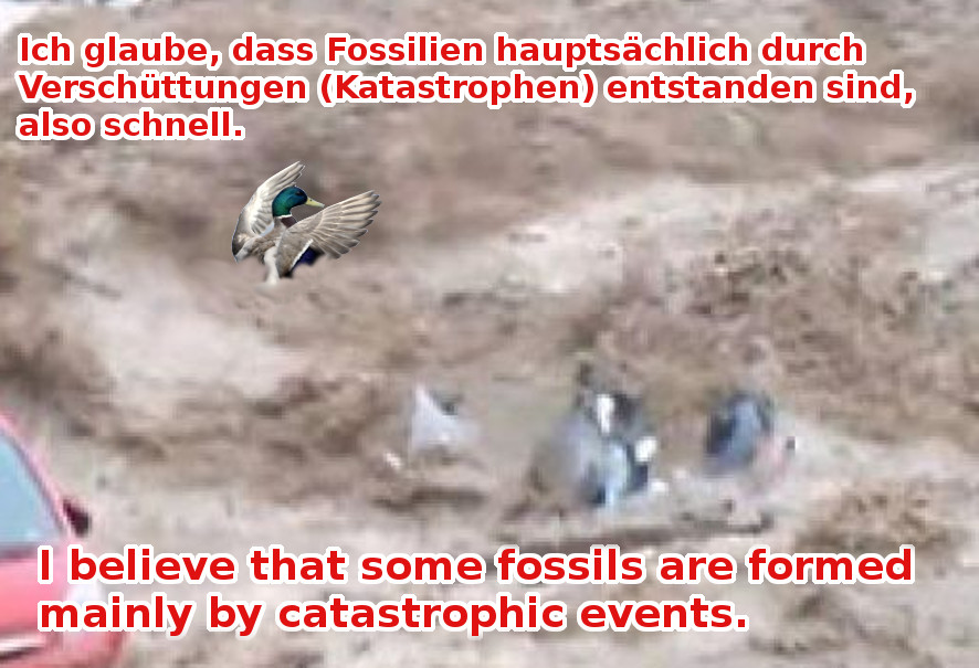Ich galube, dass Fossilien hauptsächlich ....