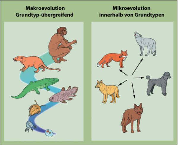 Mit freundlicher erlaubnis aus www evolutionslehrbuch info